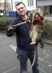 Didžiojoje Britanijoje rasta pati didžiausia šalies žiurkė